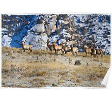 Raghorn's Herd Poster