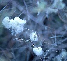 Cotton white flower arround wood by Mel-D