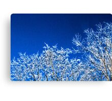 winter trees 1 Canvas Print
