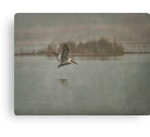 Brown Pelican in the Fog Canvas Print