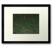 A dove chasing a red flower Framed Print