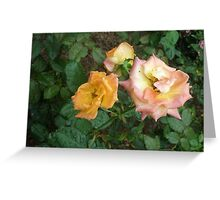 Romance between the roses roses Greeting Card