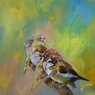 Finches by Michael Creese