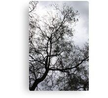 Winter Tree Silhoutte Canvas Print