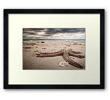 Starfish - Woodman Point, Western Australia Framed Print