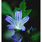 Blue plant by bluetaipan