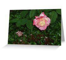 The regal queen flower bowing gracefully to kiss. Greeting Card