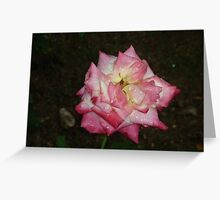 A rose queen gracefully having a morning drink Greeting Card