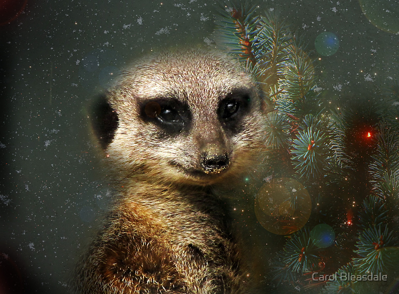 Waiting for Santa by Carol Bleasdale