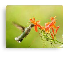 Hummingbird with Orange Flower Canvas Print
