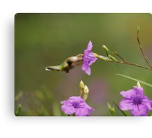 Hummingbird with Violet Flower Canvas Print