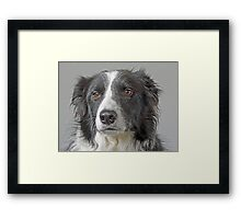 Border Collie Dog Portrait Framed Print