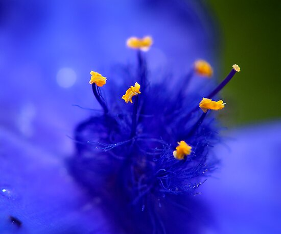 The blue by THHoang