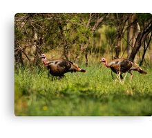 Wild Turkeys Canvas Print