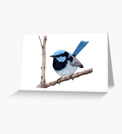 Superb fairy-wren Greeting Card
