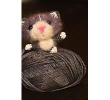 Fuzzy Cat Photographic Print