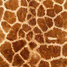 Giraffe by nicholasdamen