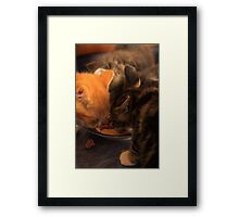 Lunch for Kittens Framed Print