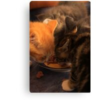 Lunch for Kittens Canvas Print