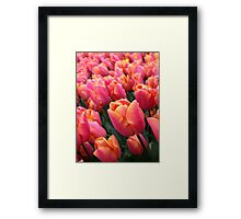 Dutch Vibrant Pink Tulips Field Spring Flowers Holland Framed Print