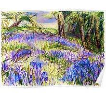 Bluebells by Dolfor Rd, Pen & Pencil Artwork Poster