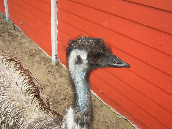 Emu Adventure by Julie  Sutherland