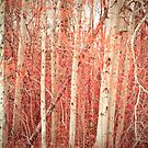 Autumn Birch Trees by Olivia Joy StClaire