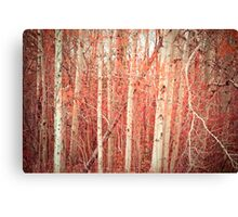 Autumn Birch Trees Canvas Print