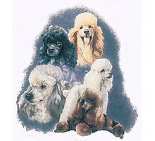 Poodle w/Ghost Image Photographic Print