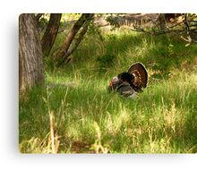 Wild Turkey Gobbler in the Woods Canvas Print