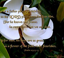 """Magnolia Blossom""~Psalm 103:13-15 by franticflagwave"