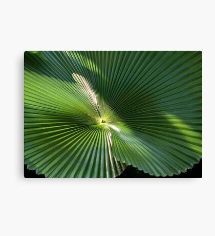 Radial Charm Delight (Licuala Cordata Palm detail) Canvas Print