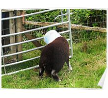 Ram A Lamb A Ding-Dong Poster
