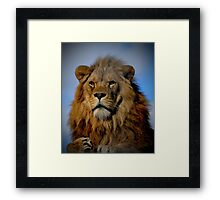 Portrait of a Proud Male African Lion with Amber Eyes Framed Print