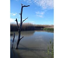 Dead Wood in the Water Photographic Print