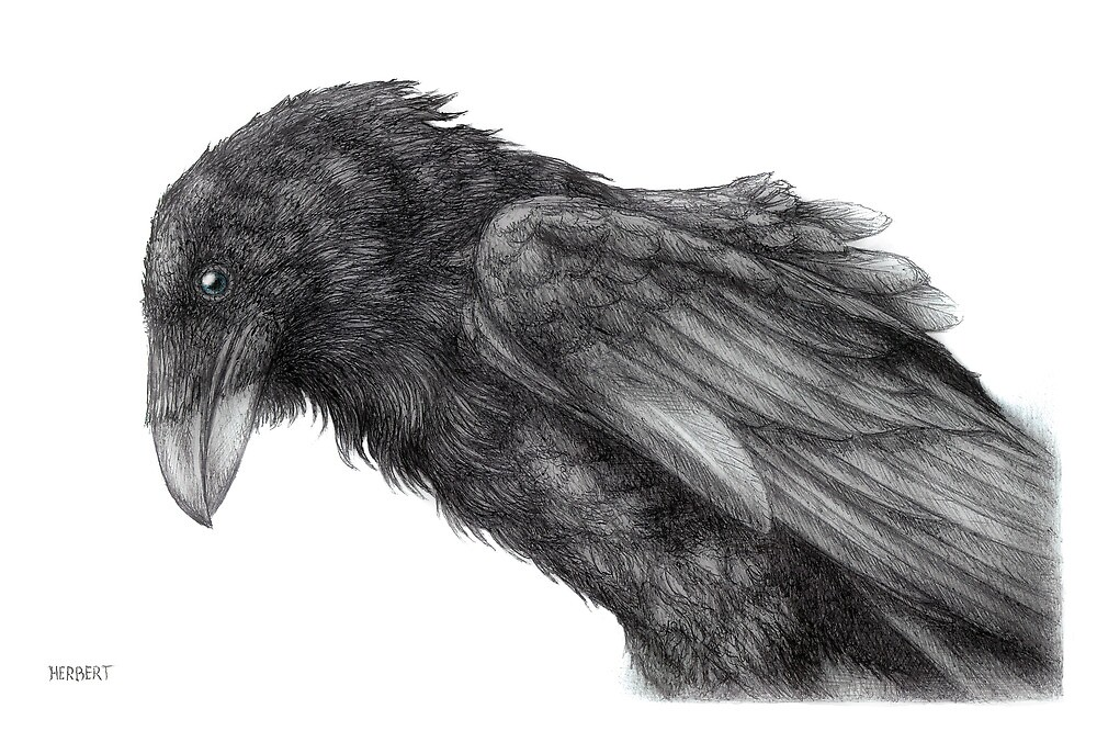 King crow by Indigo46
