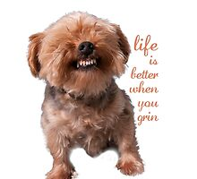 Dog Life is better when you grin by Ilze Lucero