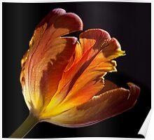 Parrot Tulip 2 Poster