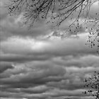 Trees and Clouds  by Robert Ullmann