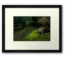 Box Turtle at Old Man's Cave Framed Print
