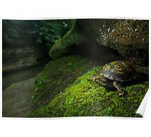 Box Turtle at Old Man's Cave Poster