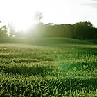 Grassy Sunset by AndrewBerry