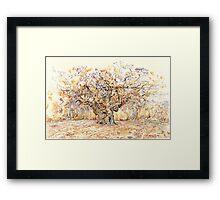 Major Oak, Sherwood Forest Framed Print