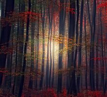 Last Glance of Fall by Philippe Sainte-Laudy