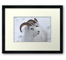 A Sheepish Smile Framed Print