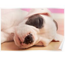 Sleeping boxer Poster