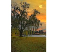 THE WIND AND THE WILLOWS Photographic Print