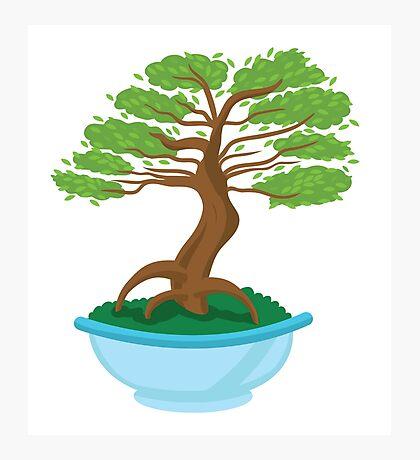 Bonsai plant tree (made miniature) Photographic Print