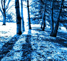 Blue Forest 2 Natural Light and Shadow by M Sylvia Chaume