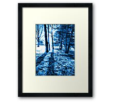 Blue Forest 2 Natural Light and Shadow Framed Print